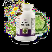 coral artischocke / coral artichoke