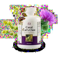 coral krallendorn / coral katzenkralle / coral cat's claw