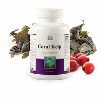 coral braunalge / coral kelp